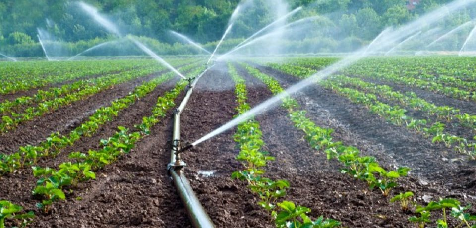 Installing a New Irrigation System for Your Garden